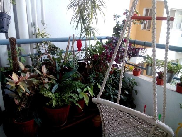 My cosy balcony garden(s)