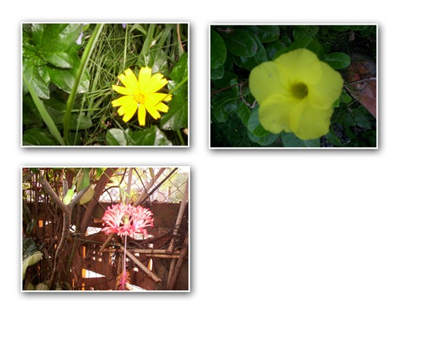 Flowers At My Garden & in Ponds