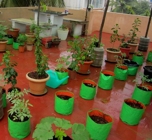 Artnlight Madras Terrace House Chennai: What's New: Devaki's Tips For Setting Up A Terrace