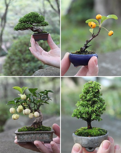How To Plant Train And Care For A Bonsai