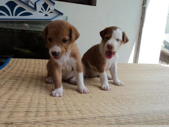 Adopt a Pet at the Blue Cross Adoption Drive
