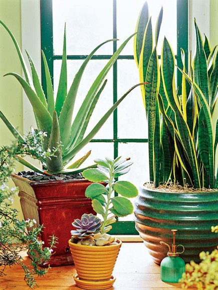 How To Keep Your House Plants Healthy