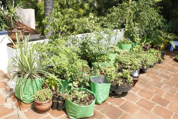 Terrace Garden Ideas Bangalore how to grow your very own organic kitchen garden | sulekha home talk