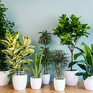 Here Is A List Of Low Light Household Plants That You Can Use To Bring Back  The Much Needed Greenery To Your Home.