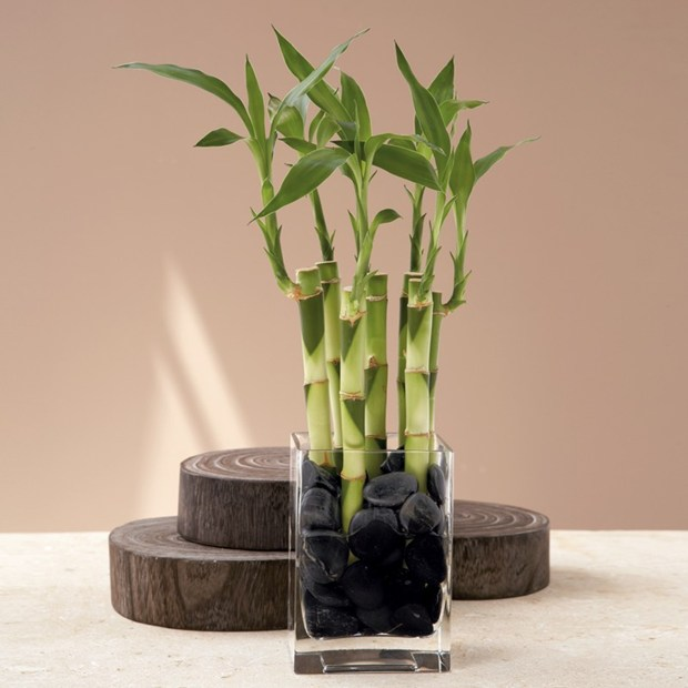Low Light Plants For Your Sun Deprived Home & Low Light Plants For Your Sun Deprived Home | Sulekha Home Talk azcodes.com