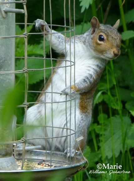 How to keep squirrels away from your garden sulekha - How to keep squirrels from digging in garden ...
