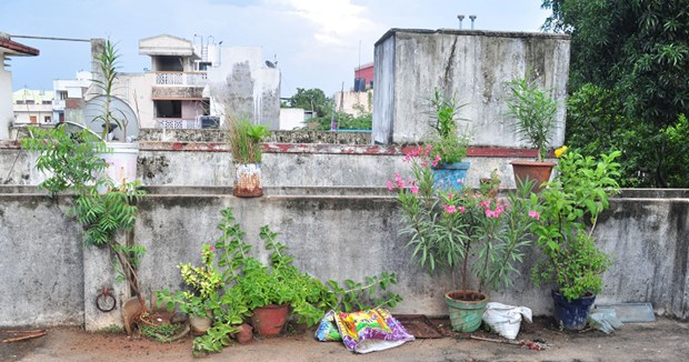 Kit given by the tamil nadu government as i have heard that people are getting good results from it below is the picture of my humble terrace garden