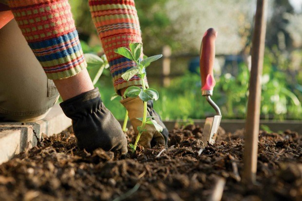 Here below are the 6 essential tools one must own for gardening  6 Essential  Gardening. What Are Five Essential Garden Tools To Own   OmuraConsulting com