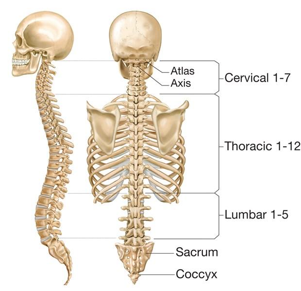 Homeopathy treatment for slipped disc & spondylosis   Sulekha Creative